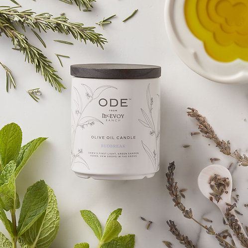 Ode Olive Oil Candle - Budbreak