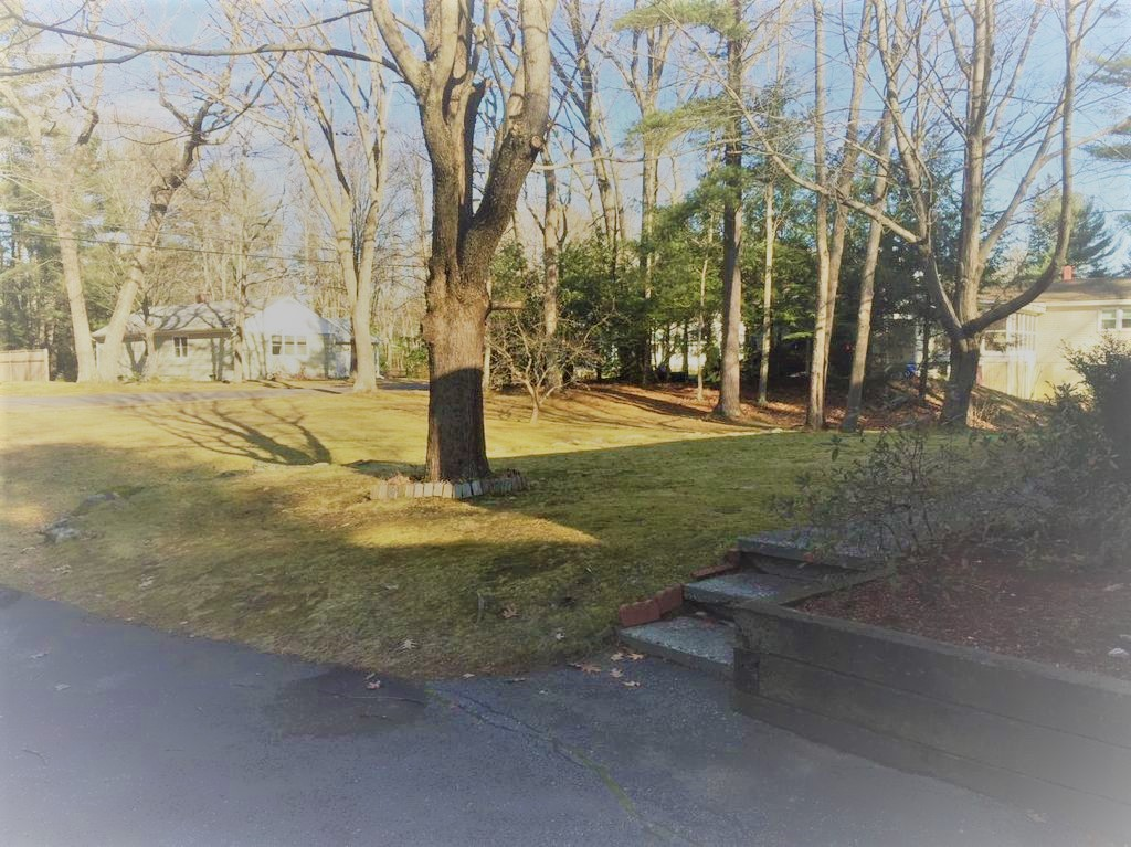 Front yard (2)