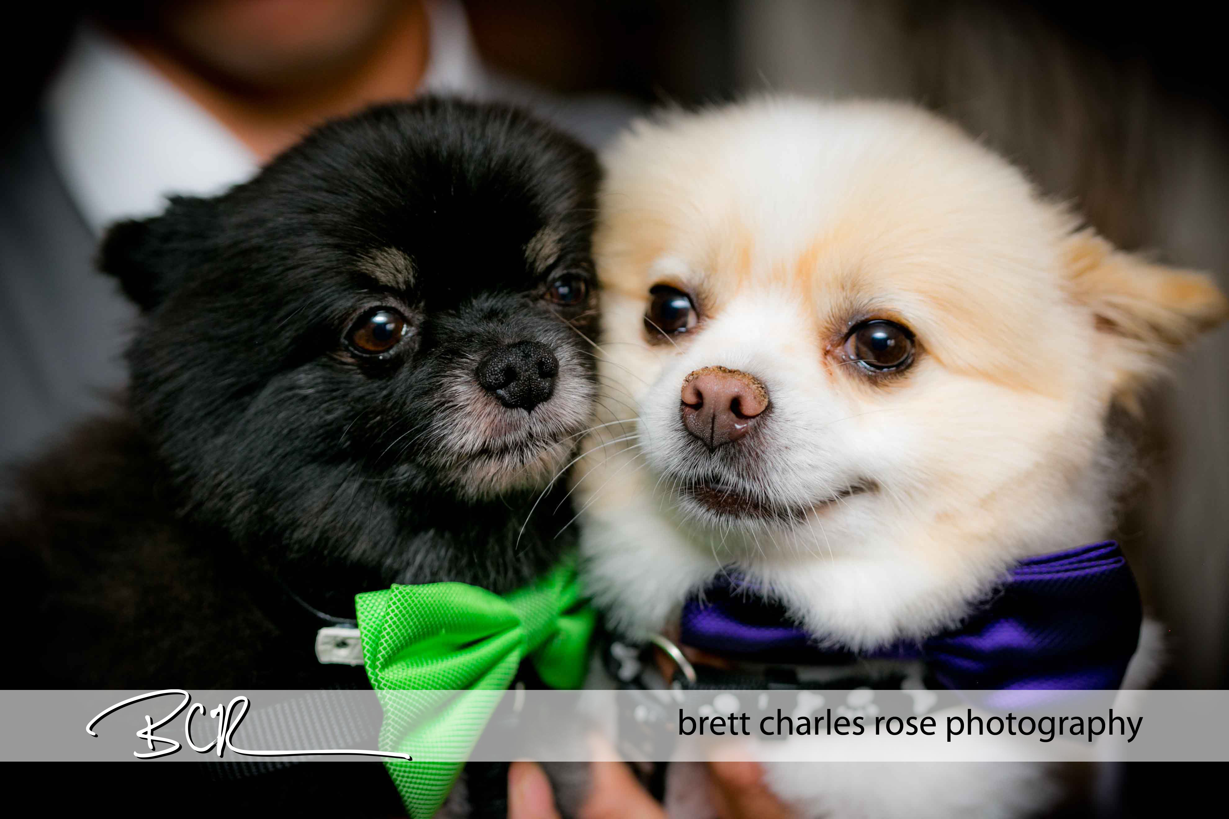 wedding dogs, wedding pets