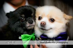 wedding dogs, wedding pets