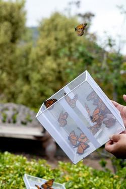 butterflies, wedding details