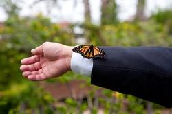 Wedding details, butterflies