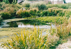 HIGHGROVE POND 2003
