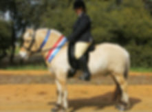 Gustav at CPS under saddle.jpg