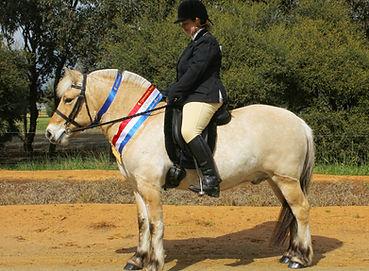 Gustav at CPS under saddle.jpg