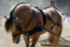 Greg stallion 2_.jpg