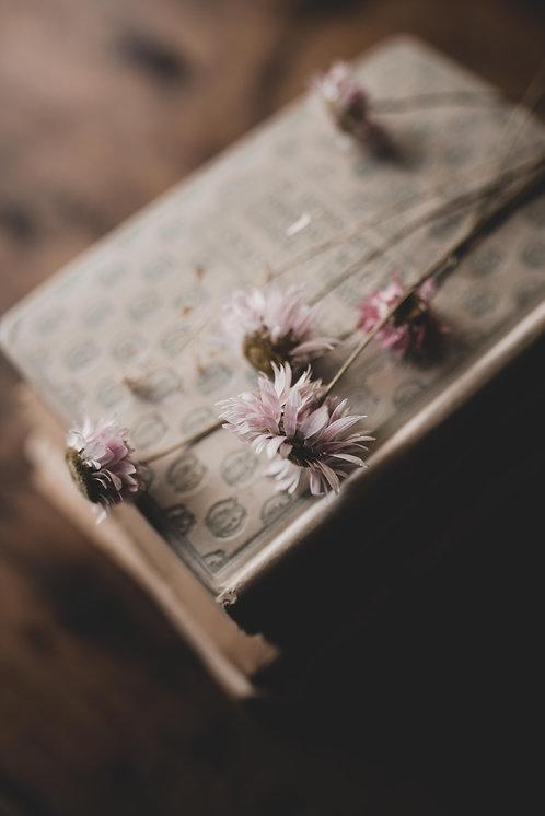 FLOWERS FW47