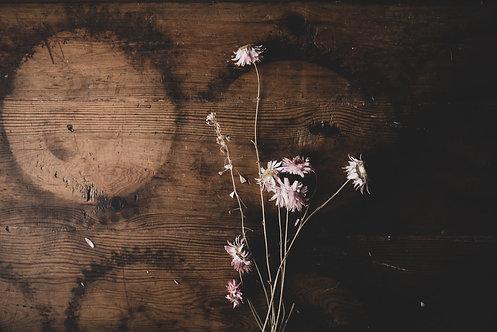 FLOWERS FW41
