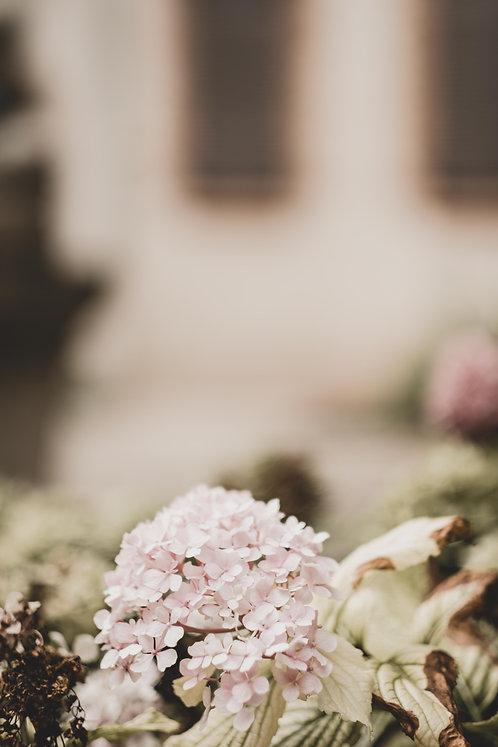 FLOWERS FW21