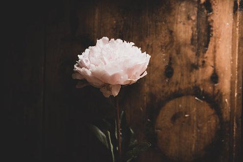 FLOWERS FW54