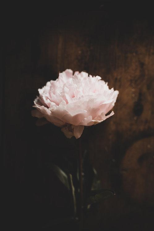 FLOWERS FW53