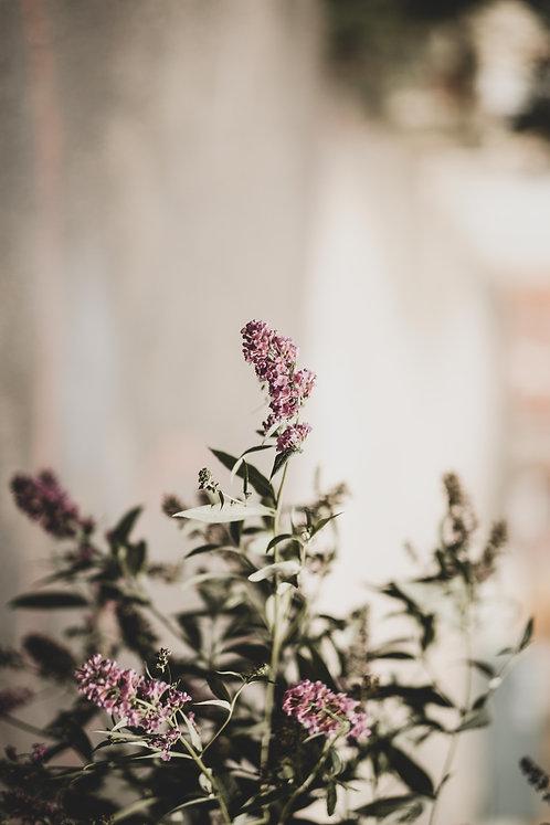 FLOWERS FW5