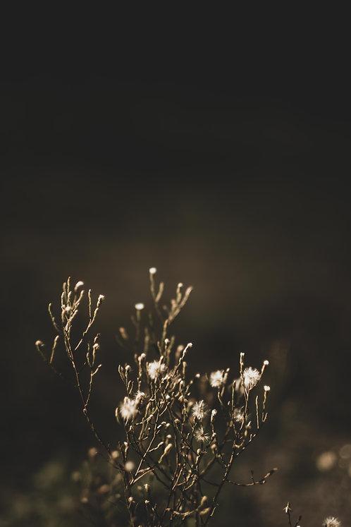 FLOWERS FW6
