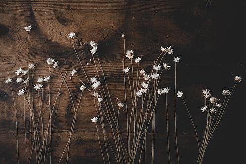 FLOWERS FW42
