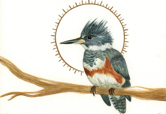 The Royal: Kingfisher