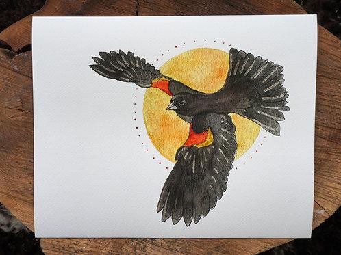 The Herald: Red Winged Blackbird Giclée Print