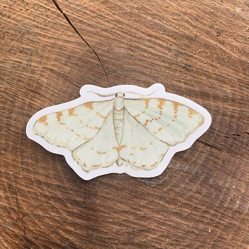 Lesser Maple Spanworm Moth Sticker