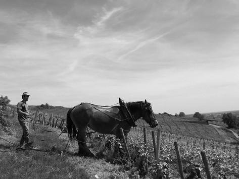 Laboure à cheval...