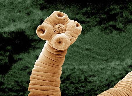 Paraziti: jednotlivé typy a ochrana proti nim