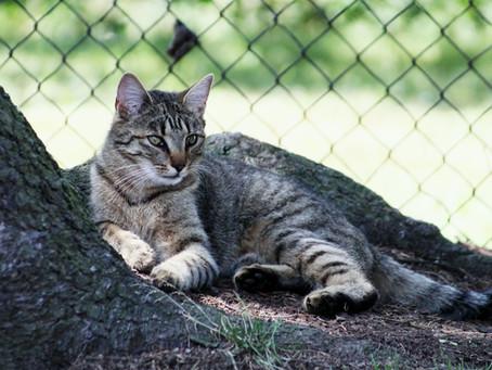 Abraham Hicks: Proč zvířata žijí kratší životy?