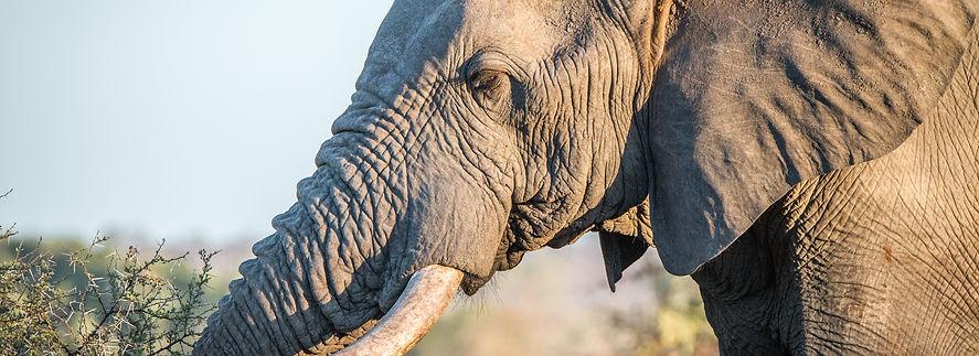Powamaxx Anti Poaching Solutions