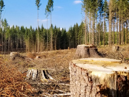 Stop à l'exploitation massive de la biomasse !