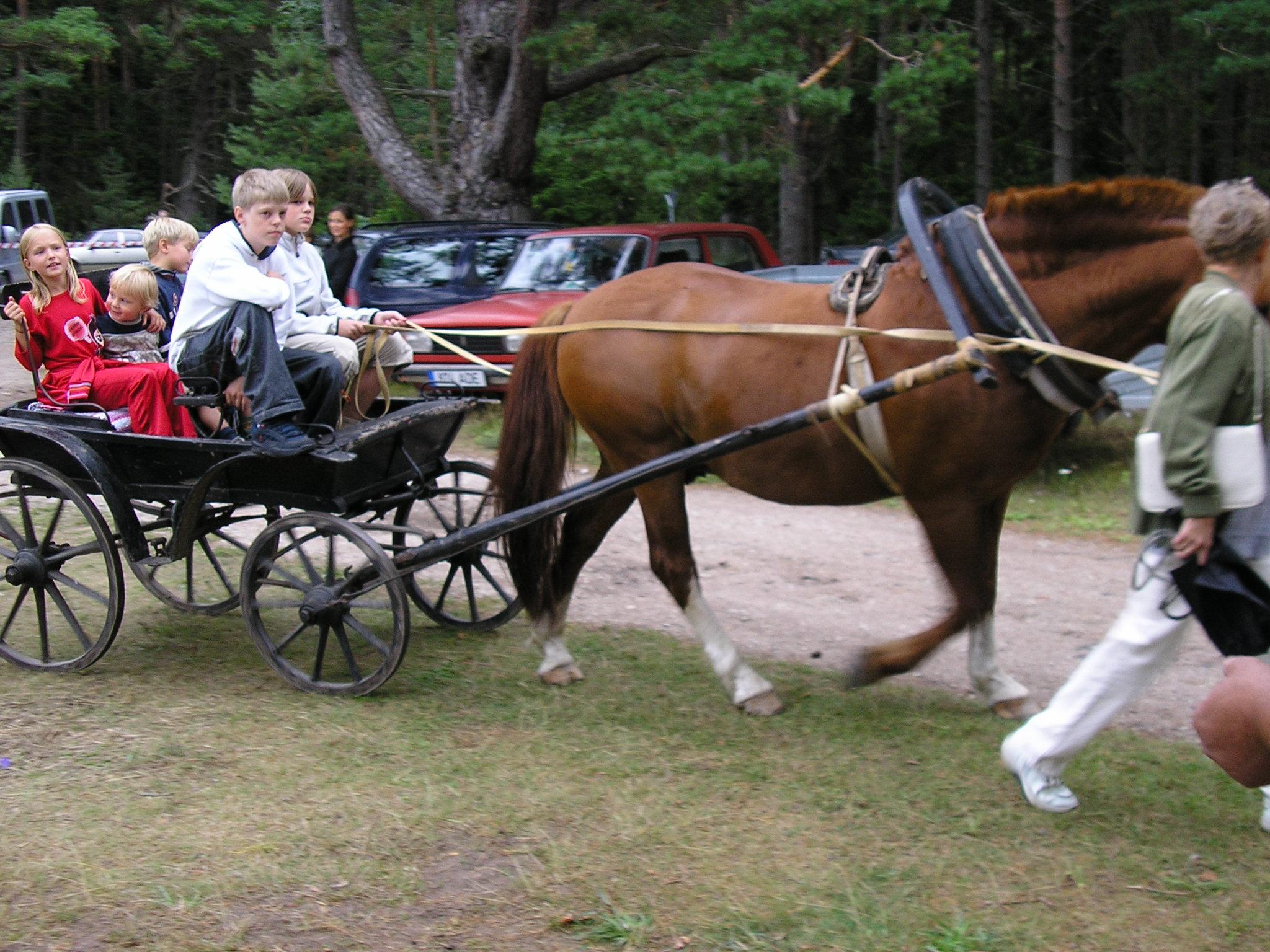 Laasi_Heino_sõidutas_lapsi_hobusega.JPG
