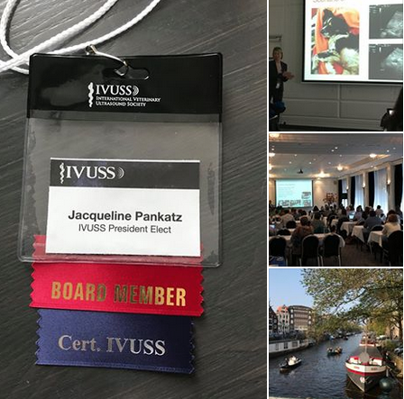 IVUSS Meeting 2017 Amsterdam