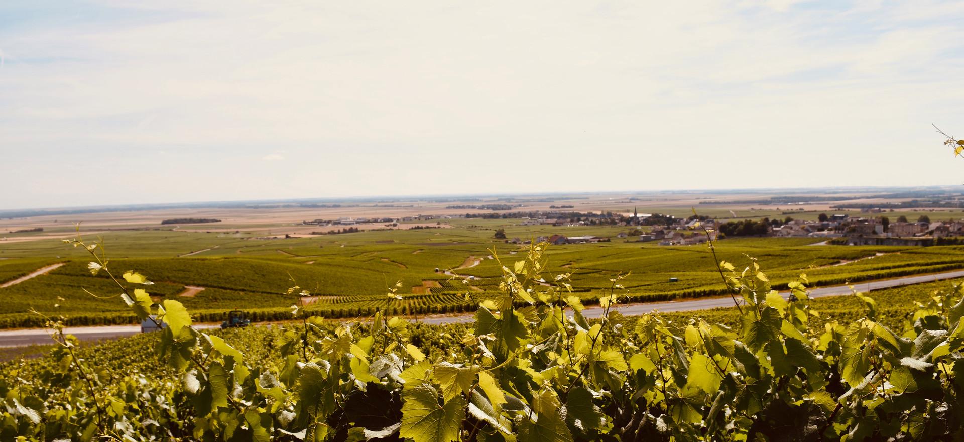 Blick über die Côtes des Blancs