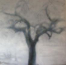 Perenboom 3.jpg