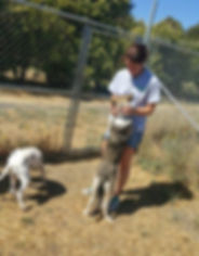 pet boarding, pet kennels, dog boarding, dog kennels, Woodland, solano, vacaville, fairfield, davis, sacramento, napa, rio vista, benecia, concord, pleasant hill, walnut creek