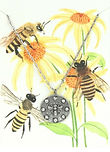 Bella Vita Honey Bee 2.jpg