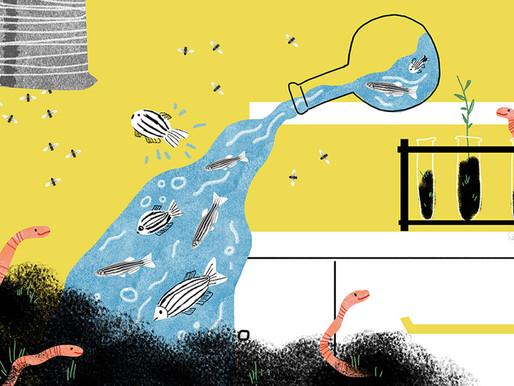 Lo que dice el estudio de gusanos, moscas y peces sobre el autismo