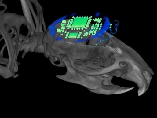 Los dispositivos optogenéticos inalámbricos sincronizan neuronas entre ratones
