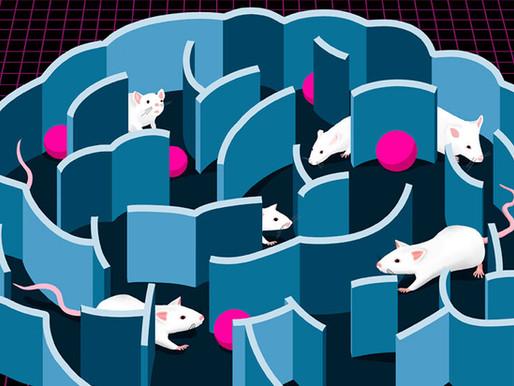 Los científicos siguen intentando descifrar el misterioso vínculo entre la serotonina y el autismo
