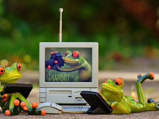 Una computadora en el reino animal