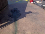 Stamped Concrete Alligator