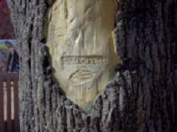 Fossilcrete Tree Bark Stamp
