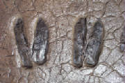 Deer Tracks Stamped Concrete