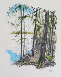 """""""View From the Woods #2"""""""