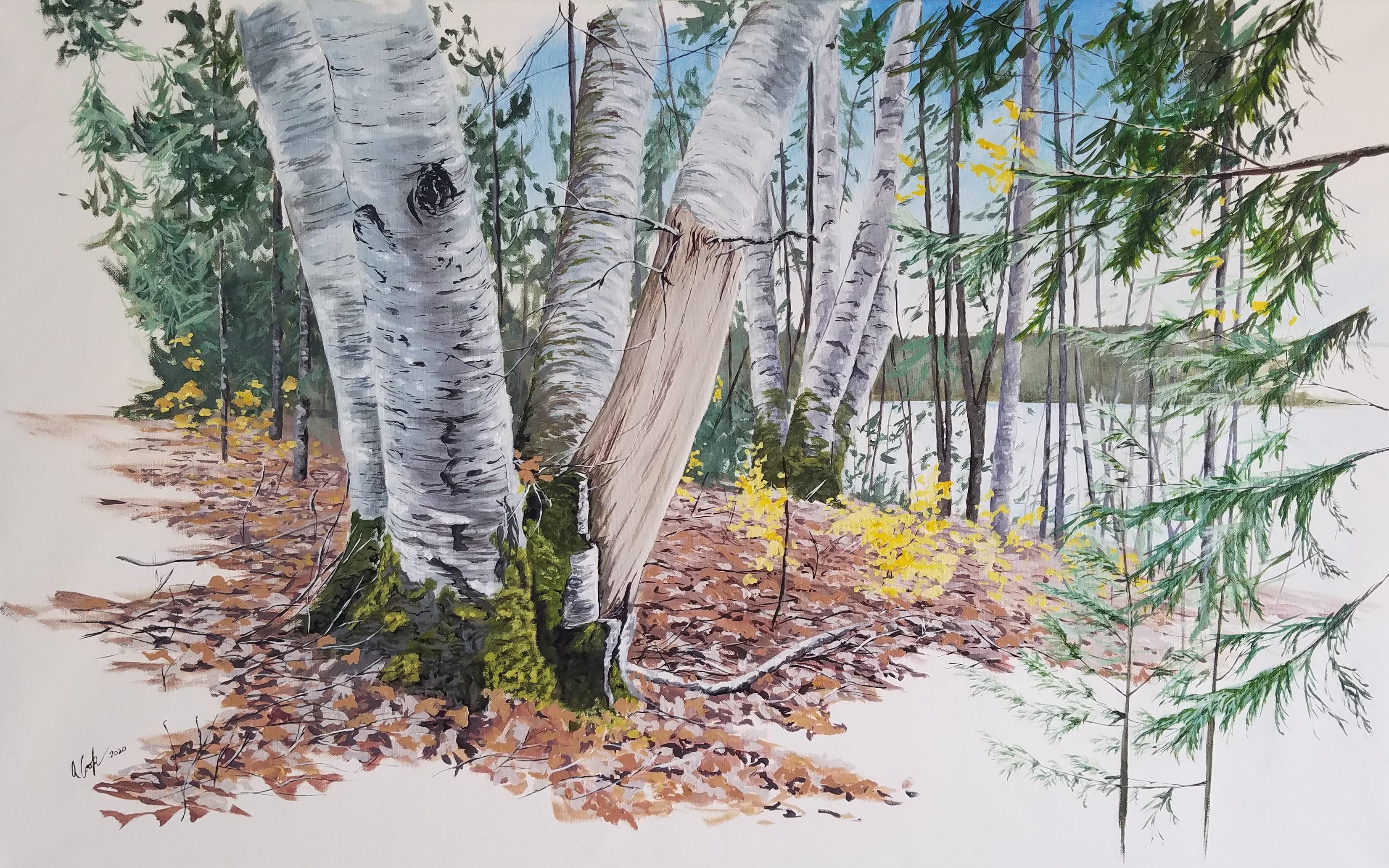 Hidden Birch #2