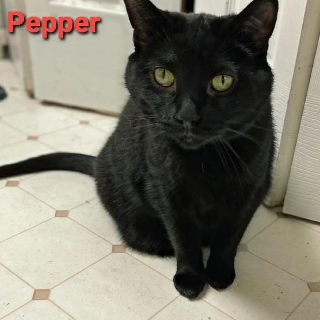 Pepper aka Billy Bob
