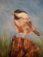 My Domain, Carolina Chickadee