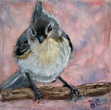 Curious, Tufted Titmouse SOLD