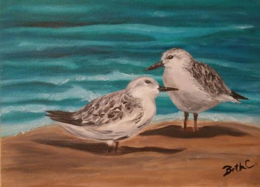 Sweet Sanderlings