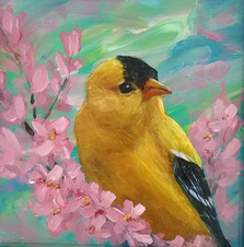 Spring Visitor (Goldfinch), 5x5 matted in black to fit a standard 8x8 frame, $35 plus shipping and tax