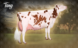 Miss Pottsdale Dfi Tang-Red (EX-94)