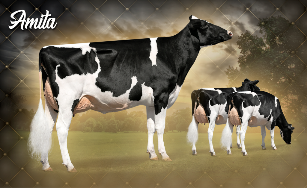 Apple-Pts Amita-ET *RC (VG-89 EX-MS 2Y)