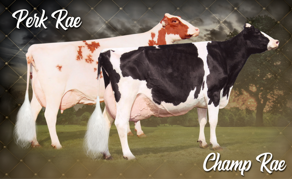 Golden-Oaks Perk Rae-Red (EX-90 EX-MS) & Golden-Oaks Champ Rae (EX-93 3E)