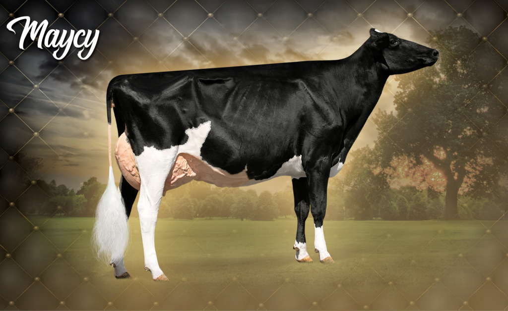 Drolie Doorman Maycy (EX-90 EX-MS)